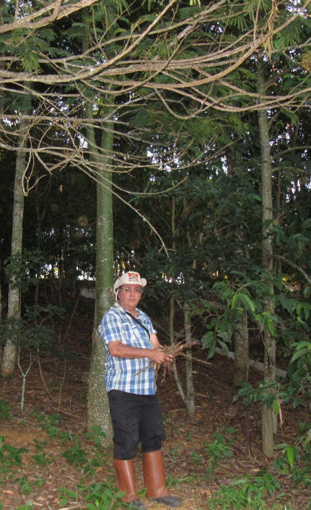 O professor  Sebastião Venâncio Martins e a área de floresta recuperada. Foto: Marcelo Auler